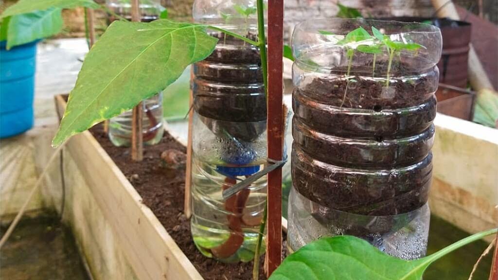 cara menanam sayur di botol bekas